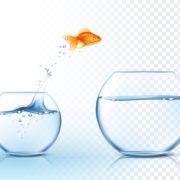 internet marketing and web design